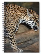 Here Kitty Kitty Spiral Notebook