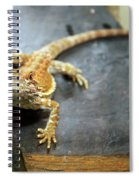 Here Lizard Lizard Spiral Notebook