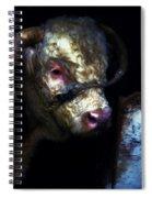 Hereford Bull 2 Spiral Notebook