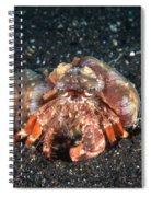 Hermit Crab With Anemone Spiral Notebook