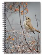 Hermit Thrush Spiral Notebook