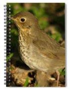 Hermit Thrush Spiral Notebook