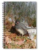 Dark-eyed Junco Spiral Notebook