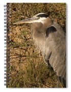 Heron Basking In The Morning Sun Spiral Notebook