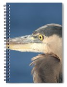Heron Close-up Spiral Notebook