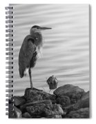 Heron In Black And White Spiral Notebook