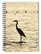 Heron Standing In Water Spiral Notebook