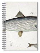 Herring And Sprat Plate Xxix Spiral Notebook