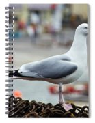 Herring Gull At The Harbour Spiral Notebook