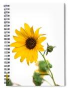 Hi Key Sunflower Spiral Notebook