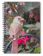 Hiatus Spiral Notebook