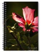 Hibiscus 03 Spiral Notebook