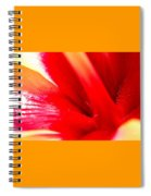 Hibiscus Abstract In Red And Yellow Spiral Notebook