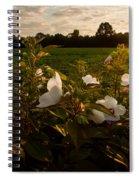 Hibiscus At Sunrise  Spiral Notebook