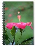 Hibiscus Ballerina Spiral Notebook
