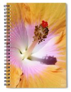 Hibiscus Center Spiral Notebook