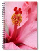 Hibiscus Flower Close Up Spiral Notebook