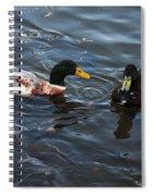 Hibred Ducks Swimming In Beech Fork Lake Spiral Notebook