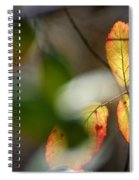 Hidden Forest Leaves Spiral Notebook