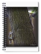 Hide And Seek Squirrels Spiral Notebook