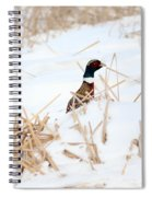Hiding Rooster Spiral Notebook