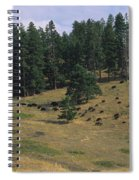High Angle View Of Bisons Grazing Spiral Notebook