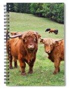 Highland Cattle Spiral Notebook