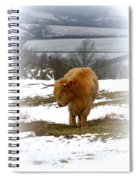 Highland Cow Spiral Notebook