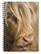 Highland Cow Portrait Spiral Notebook