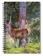 Highland Stag Spiral Notebook