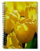 Hill Of Golden Tulips Spiral Notebook