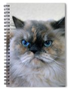 Himalayan Persian Cat Spiral Notebook