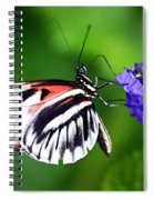 Hint Of Red Butterfly Spiral Notebook