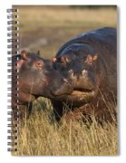 Hippo Cow And Calf Spiral Notebook