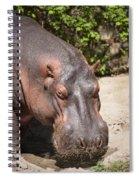 Hippo Hair 1 Spiral Notebook