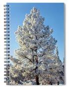 Hoar Frost Ponderos Pine Tree, Sundance Spiral Notebook