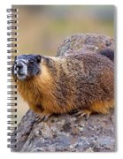 Hoary Marmot  Spiral Notebook