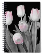 Holland Tulips In Black And White With Pink Spiral Notebook