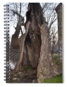 Hollow Tree At Mather Mill Spiral Notebook