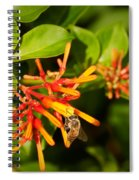 Honey Bee 6 Spiral Notebook