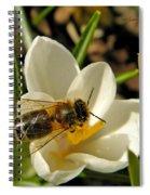 Honey Bee And Crocus Spiral Notebook