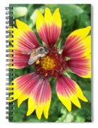 Honey Bee On A Indian Blanket Spiral Notebook