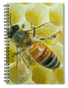 Honey Bee In Hive Spiral Notebook