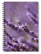 Honey Bee In Lavender Spiral Notebook