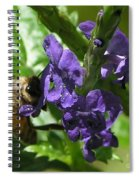 Honey Bee On Purple Flower Spiral Notebook