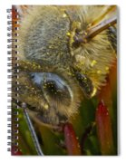 Honey Bee Profile Spiral Notebook