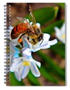Honeybee And Squill Spiral Notebook