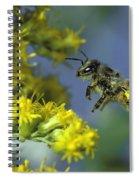 Honeybee In Flight Spiral Notebook
