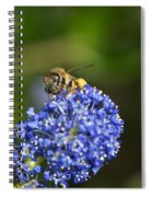 Honeybee On California Lilac Spiral Notebook