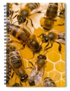 Honeybee Workers And Queen Spiral Notebook